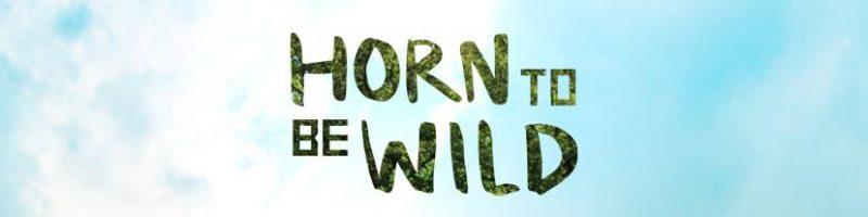 Erste Künstler fürs Horn To Be Wild